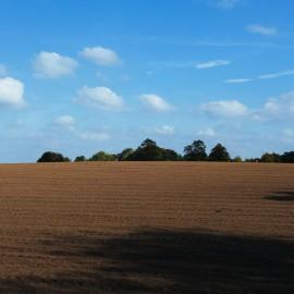 field-2